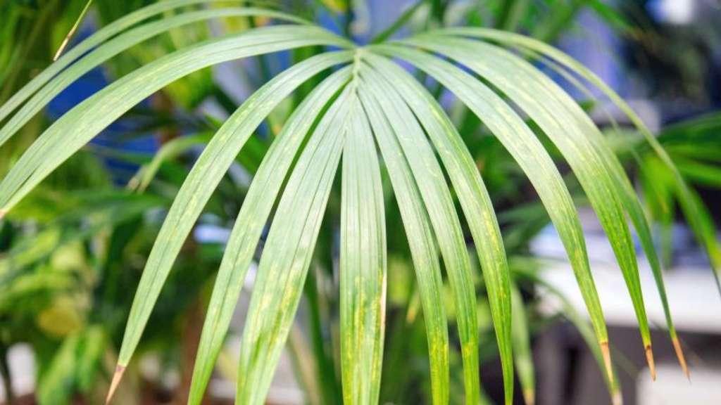 Schadet staub auf den bl ttern den pflanzen wohnen - Zimmerpflanzen berlin ...