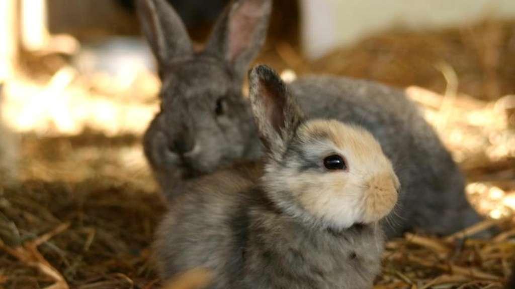 fl he bei kaninchen partnertiere immer mitbehandeln leben. Black Bedroom Furniture Sets. Home Design Ideas