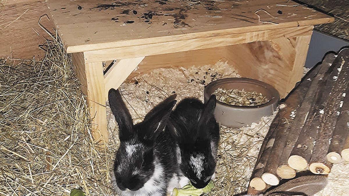 Kaninchen abzugeben | Einbeck - leinetal24.de